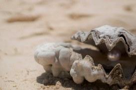 Il lavoro dell'ostrica