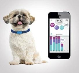 FitBark, la tecnologia per i nostri cani!