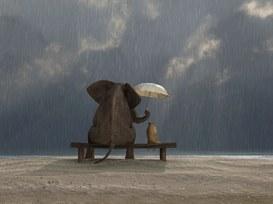 Sempre a proposito di gentilezza...