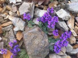 I tablet innovativi che verranno