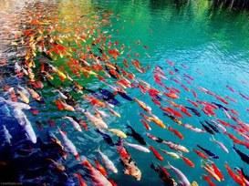 I pesci siamo noi: pesci, pescatori e predatori nell'acquario digitale della tecnologia