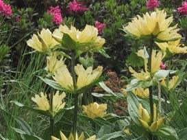 Il tablet nelle corsie di ospedale