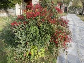 La rivoluzione dei tablet in arrivo