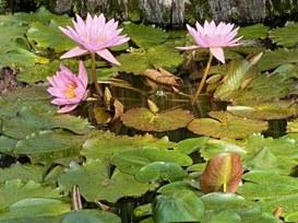 La semplicità dell'iPad per una vita mobile serena