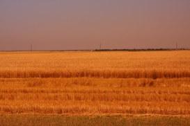 Mente, cervello e tecnologia