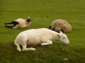 Sono giovane e nativo digitale! Il mondo 'is on my side'! [ 2]