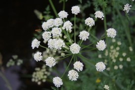 Nuove tecnologie e social networking online