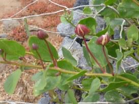 Paradigmi della relazione e credibilità della marca