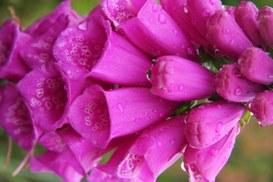 Pratiche di social networking e loro implicazioni [1 di 2]