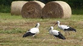 Voliere e acquari di Facebook per uccellini e pesciolini in gabbia!