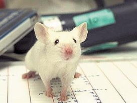Facebook e i topi che felicemente vi scorrazzano...