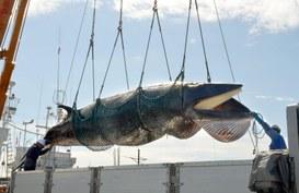 Dal phishing al whaling, malviventi a caccia di pesci grossi!