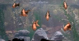 L'ingenuità del cittadino della Rete: pesci in cerca di ami!