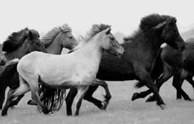 Il cavallo corridore si vede all'ultima corsa!